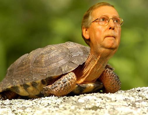 McConnell-Turtle