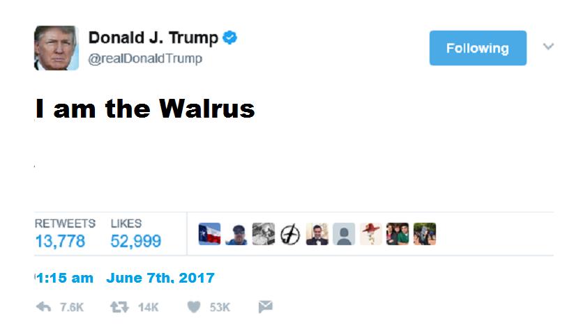 Trump tweet walrus