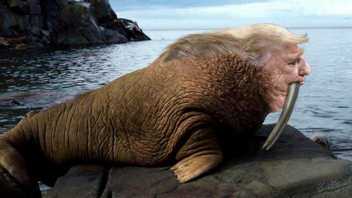 Trump Walrus 2