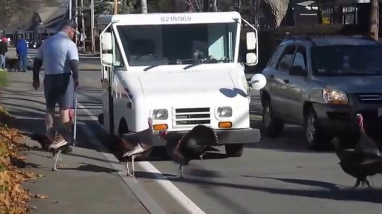 turkeys threaten deliverys