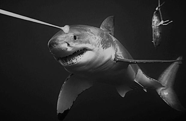sharklaserbeamBW