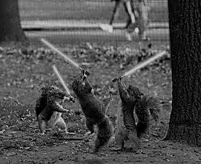 squirrels with light sabers