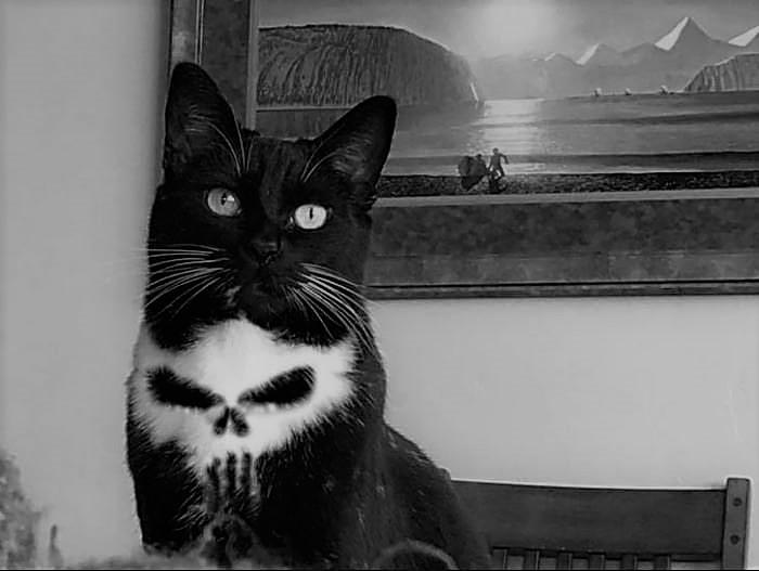 strangeloves cat