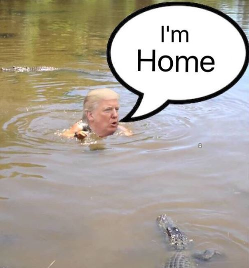 trump in the swamp